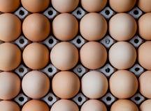 Grupo de huevos frescos en la bandeja del papel Imágenes de archivo libres de regalías