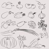 Grupo de ilustrações dos vegetais no esboço - estilo Imagens de Stock