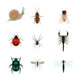 Grupo de ilustração diferente dos insetos escorpião, mosca, aranha, caracol, besouro, mosquito, borboleta, libélula, barata Imagem de Stock