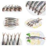 Grupo de imagens com a cavala crua dos peixes de mar dos pratos. Fotos de Stock