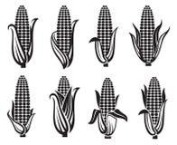 Grupo de imagens do milho Fotografia de Stock