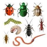 Grupo de insetos diferentes ilustração royalty free