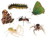 Grupo de insetos isolados no branco Fotos de Stock Royalty Free