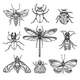 Grupo de insetos no fundo branco Símbolo do vetor Foto de Stock Royalty Free