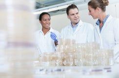 Grupo de investigadores en laboratorio científico con las placas de bacterias fotografía de archivo libre de regalías