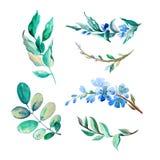 Grupo de isolado das flores e das folhas da aquarela no fundo branco Imagem de Stock