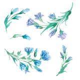 Grupo de isolado das flores e das folhas da aquarela no fundo branco Fotografia de Stock