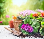 Grupo de jardinagem na tabela com flores, potenciômetros, solo de potting e plantas no jardim ensolarado Foto de Stock
