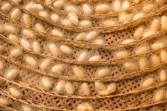 Grupo de jerarquías de los capullos del gusano de seda Fotos de archivo libres de regalías