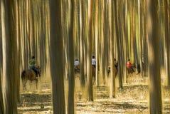 Grupo de jinetes en medio de árboles borrosos Imagen de archivo libre de regalías