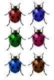 Grupo de joaninhas coloridos do vetor Imagens de Stock