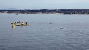 Grupo de kajaks que cruzan el marco en la bahía California de Monterey almacen de video