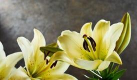 Grupo de lírios de dia amarelos perfumados frescos Fotografia de Stock