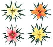 Grupo de lírios grandes bonitos com as folhas isoladas Fotos de Stock