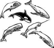 Grupo de la ballena Foto de archivo