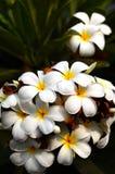 Grupo de la flor imagen de archivo