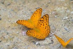 Grupo de la mariposa fotos de archivo libres de regalías