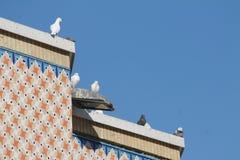 Grupo de la paloma Imágenes de archivo libres de regalías