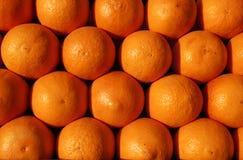 Grupo de laranjas prontas para juicing Imagens de Stock Royalty Free