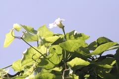 Grupo de las flores fotografía de archivo libre de regalías