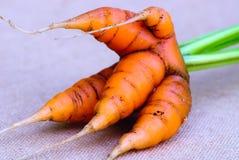 Grupo de las verduras frescas de la zanahoria en fondo gris Imagen de archivo libre de regalías