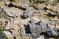 Grupo de lemurs ring-tailed Fotografia de Stock Royalty Free