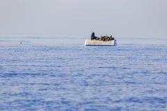 Grupo de leones marinos Imagenes de archivo