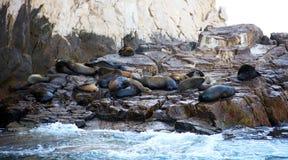 Grupo de leones marinos en Los Cabos México Imagenes de archivo