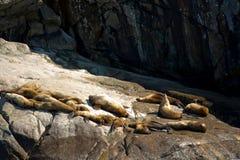 Grupo de leones marinos en roca Foto de archivo
