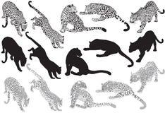 Grupo de leopardo em um fundo branco Foto de Stock Royalty Free