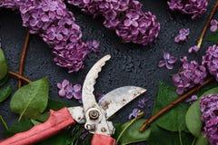 Grupo de lilás e da tesoura de podar manual roxos da mão no fundo escuro foto de stock royalty free