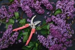 Grupo de lilás e da tesoura de podar manual roxos da mão no fundo preto foto de stock royalty free