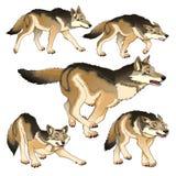 Grupo de lobos aislados ilustración del vector