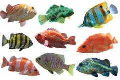 Grupo de los pescados foto de archivo libre de regalías