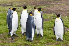 Grupo de los pingüinos de rey Foto de archivo