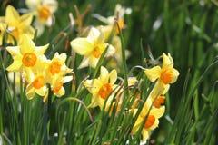 Grupo de luz do sol das flores imagens de stock
