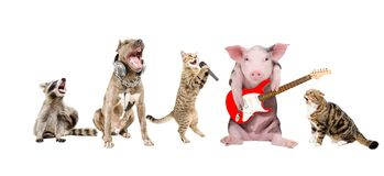 Grupo de músicos divertidos lindos de los animales imagen de archivo
