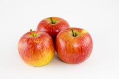 Grupo de maçãs maduras imagens de stock royalty free