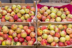Grupo de maçãs vermelhas e verdes em caixas no supermercado Maçãs no mercado do fazendeiro Caixas com maçãs frescas em uma mercea imagem de stock royalty free
