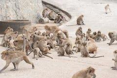 Grupo de macaco das famílias fotos de stock royalty free
