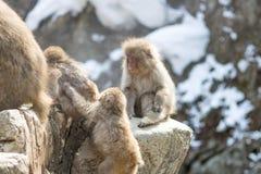 Grupo de macacos pequenos Foto de Stock