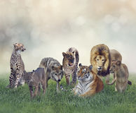 Grupo de mamíferos salvajes imagen de archivo