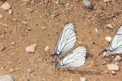Grupo de mariposas. Imagen de archivo libre de regalías