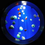 Grupo de medusa imagem de stock
