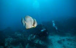 Grupo de mergulhadores de mergulhador que exploram a parte inferior de mar Imagens de Stock