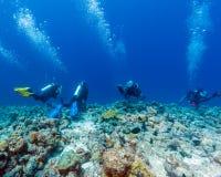 Grupo de mergulhadores que penduram na parede do recife na corrente forte Imagens de Stock