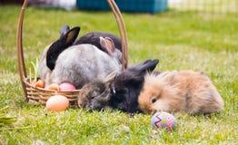 Grupo de mini conejo encendido en cesta con los huevos de Pascua de la cesta imágenes de archivo libres de regalías