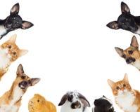 Grupo de mirar a escondidas de los animales domésticos Imagenes de archivo