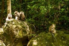 Grupo de monos en rocas Imágenes de archivo libres de regalías