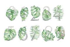 Grupo de números tropical de prata com ilustrações verdes das folhas foto de stock